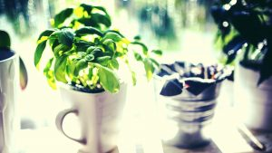 Grow your Own: Quick Start Guide to an Indoor Edible Garden