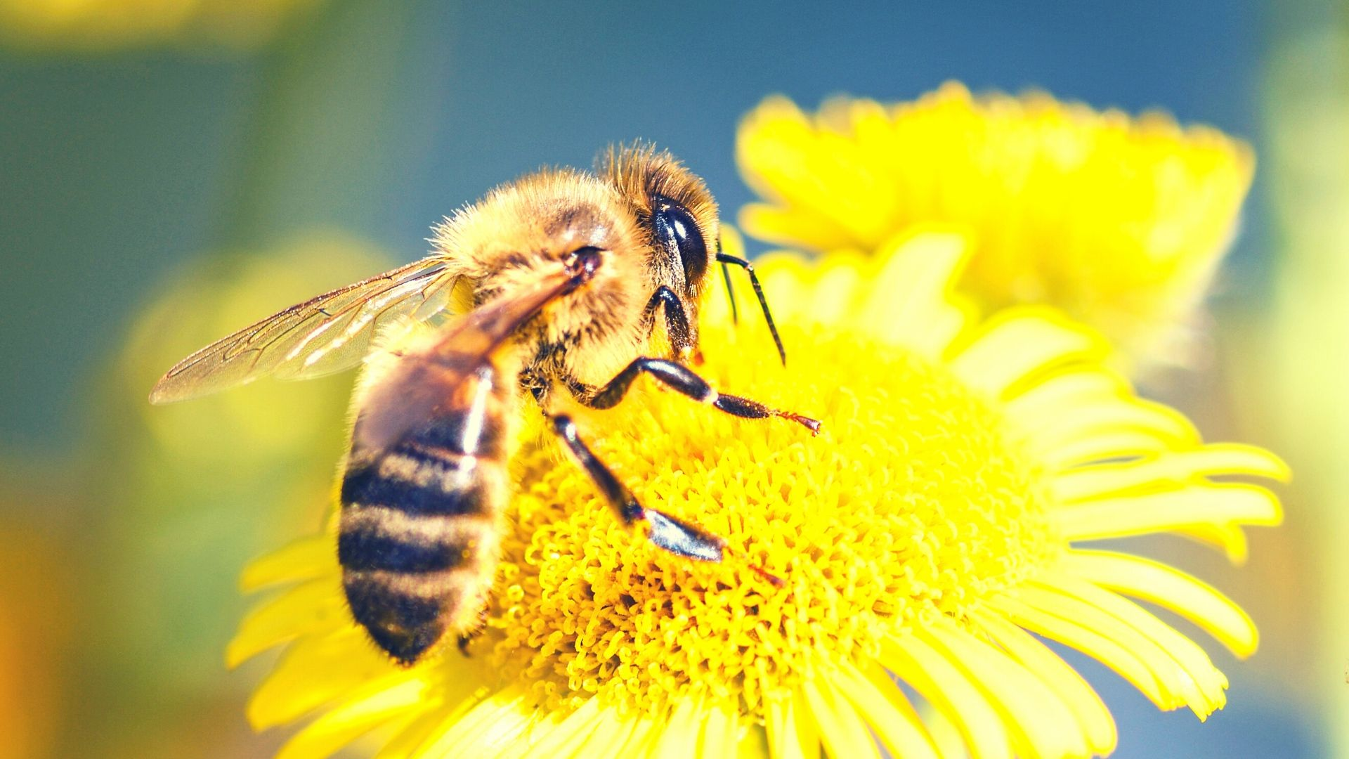 All Year Round Bee Friendly Plants for Your Garden