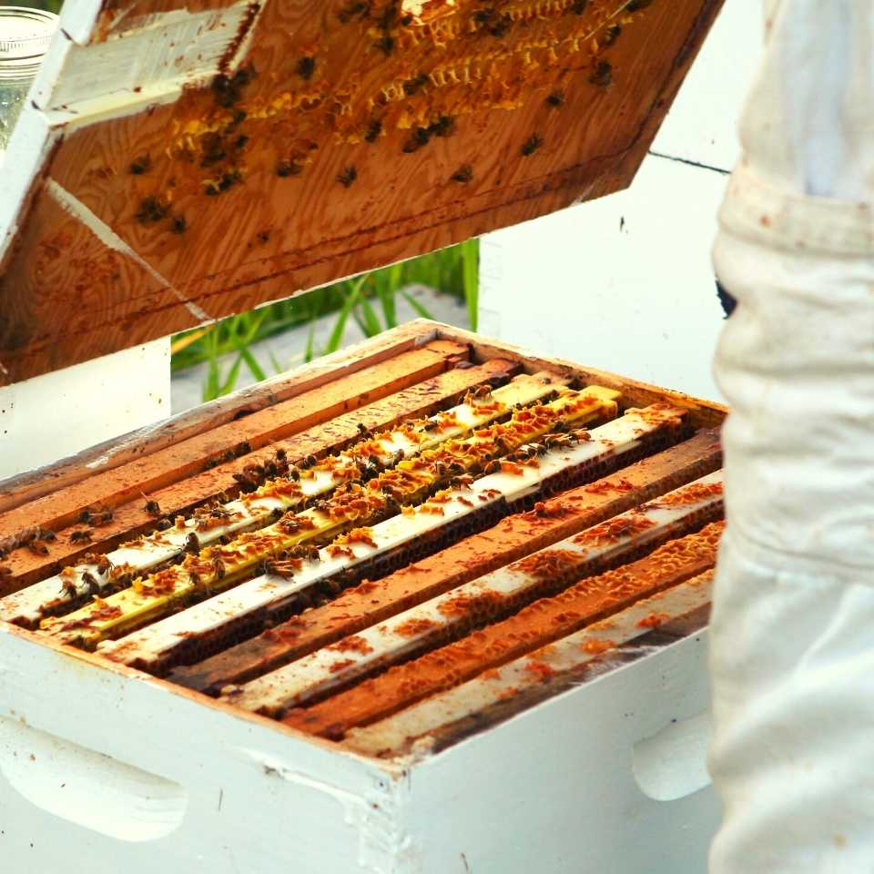 sustainable-beekeeping