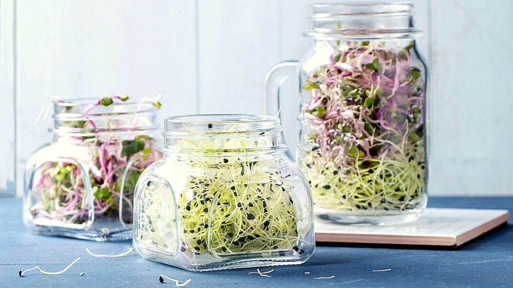 Growing-sprouts