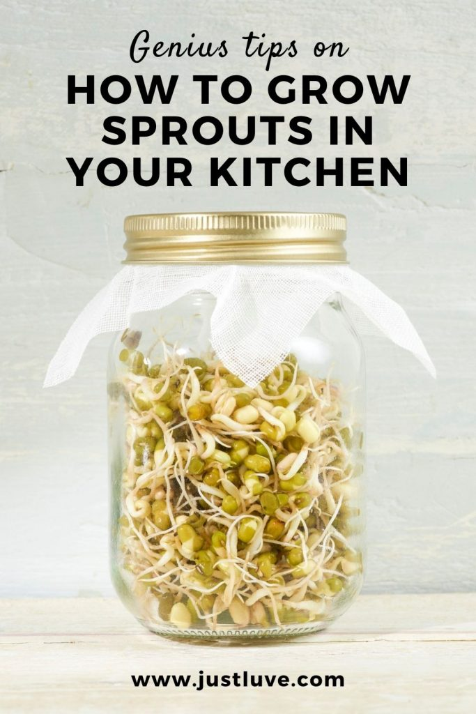 How-to-grow-sprouts-pin1